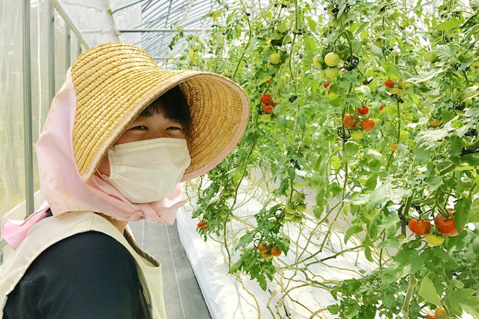 岡山県矢掛町産のフルーツトマト